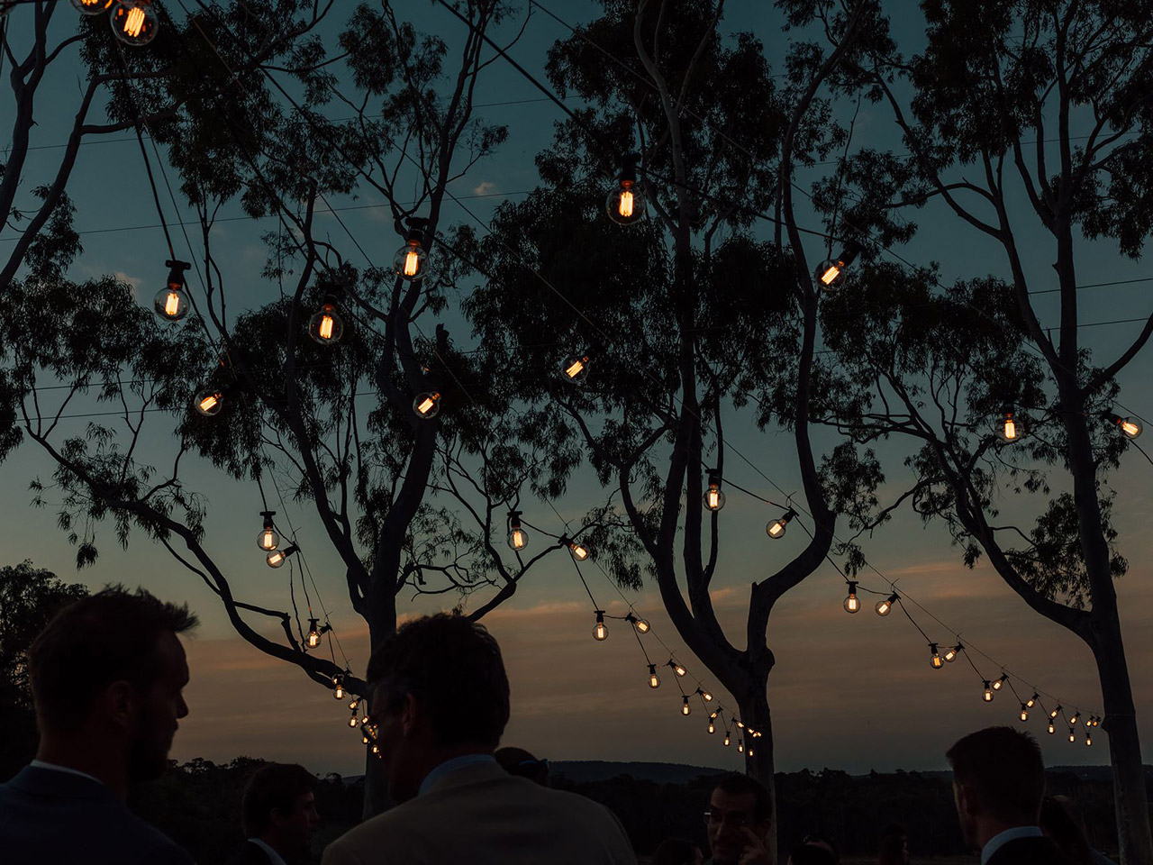 String Lights Under The Trees At Dusk.